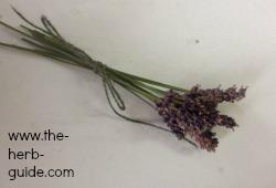 dried lavende