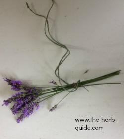 tying lavende