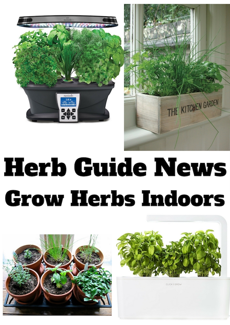 Herb garden for kitchen window - Best herbs to grow indoors ...