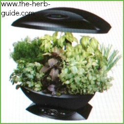 Garden Design With Indoor Herb Landscape Designs From Theherbguide