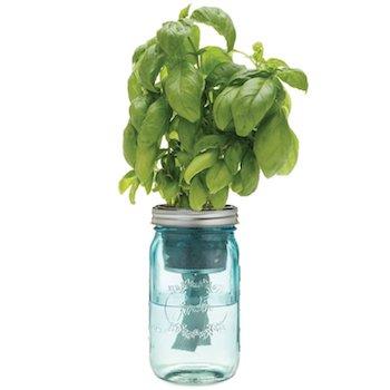 Self Watering Basil Kit