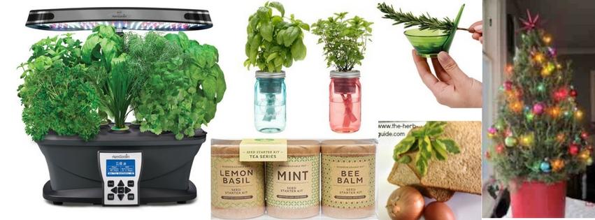 Christmas Herb Guide