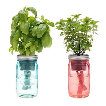 Self Watering Herb Kit